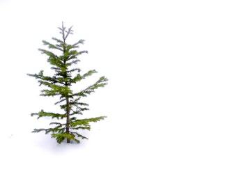 Little ponderosa tree photo, winter Colorado pine tree print, Charlie Brown snowy tree photo, snow fir tree art, winter rustic cabin decor