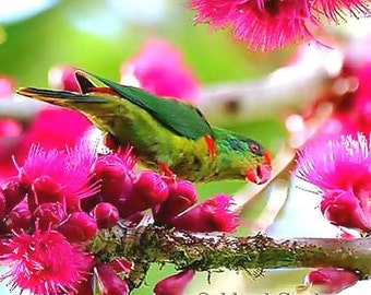 ISLAND NECTAR Fragrance Oil - Sophisticated blend of night blooming Jasmine, Exotic Passionflower, Citrus and Florals