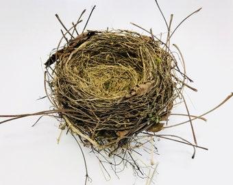 Nest, bird's nest, nest, Easter, birds, floral, nature decor, cabinet of curiosities, curiosity, bird, nest