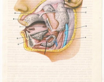 2 Vintage Anatomical Prints Medical Diagrams skull skeleton brain Illustrations Anatomy art Print  Paper Ephemera cyber monday Old Victorian