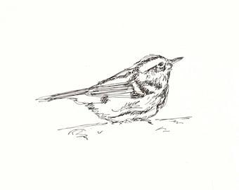 Laubsänger Original Pen & Ink Vogel Zeichnung 8 x 10 - tierische Kunst, Vogel, Natur, Linie zeichnen