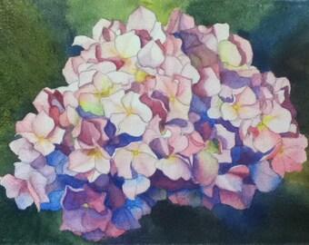 Print of Pink Hydrangea 5 x 7 Watercolor Flower