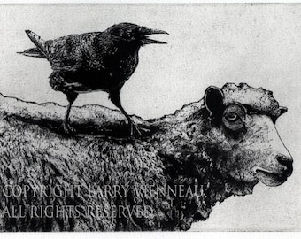 Raven artwork , Raven, crow,  black bird, Sheep, Ram,  Aesop Fables,  etching