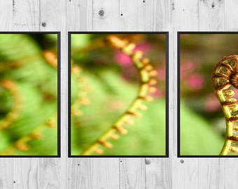 Young fern triptych, 3 piece wall art, spring photography, nature photography, three piece wall art, landscape photography, digital download
