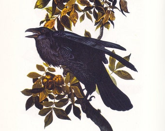 Vintage Raven Print with excerpt from the author