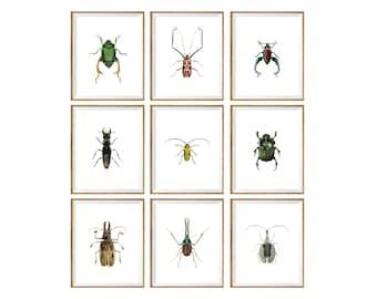 Beetles Print SET of 9, insect prints, beetle prints, beetles print set, beetle posters, beetle wall art, insect wall art, insect print set