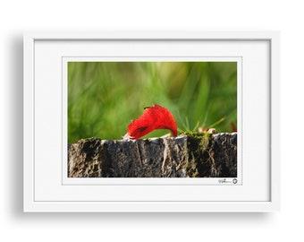 Deciduous Leaf - Autumn, Red Leaf, Nature Photography Print