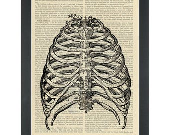 Vintage anatomy drawing Ribcage Dictionary Art Print