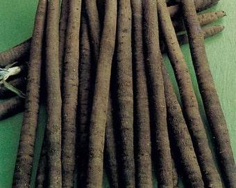 Scorzonera Hispanica Duplex - 150 Seeds - Black or Spanish Salsify