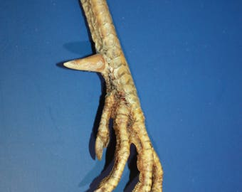 Decor - Talisman - Natural Chicken Foot Charm - Lucky Chicken Foot - Rooster Foot