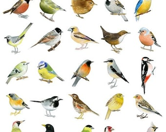 30 Birds - Limited edition archival print 8 x 10