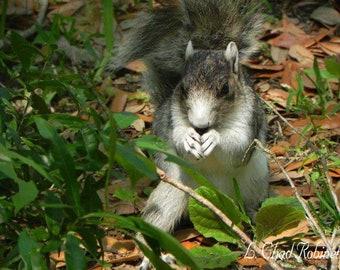 Squirrel Seeker