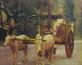 Vintage India Photo 1900s Stereoview Cards Singapore