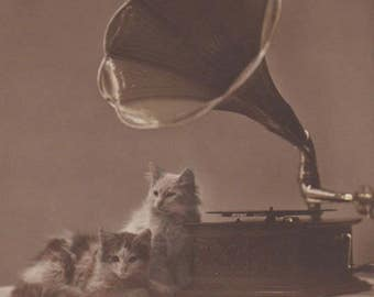 Two Cats With A Gramophone - Phonograph - Antique Photo Postcard
