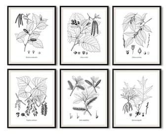 Set of 6 prints, Botanical print black and white, Black and white printable, Black and white tree, Botanical print set, large poster, JPG
