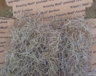 Small box of Spanish moss (Tillandsia usneoides), air plant, garden bedding, arts and crafts.