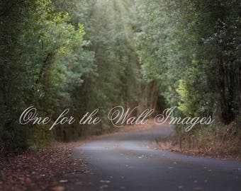 Forest Path, Digital backdrop, country road