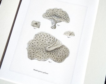 Neutral Sea Coral Print 1 Naturalist Collection on Watercolor Paper