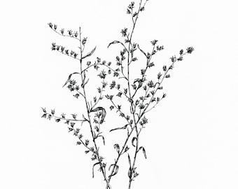 Original Floral Ink Illustration. Dry Flowers. Black Ink Botanical Illustration. 8x10 Black and White. Pen Ink Illustration, Flower Drawing.