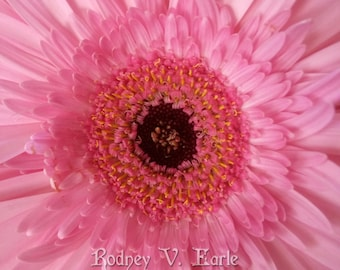 Pink Flower Instant Digital Photo Download