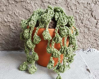 Crochet String of Pearls Succulent