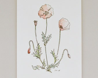 Poppy - Art Print