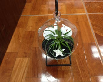 Round Ball Glass Terrarium Complete Set Up With Black Sand  (EA)