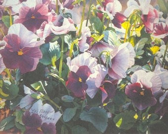 Purple Pansies  - Floral Watercolor Print