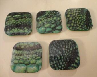 Lizard Skin Magnets Set of Five