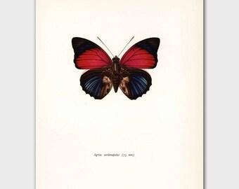 "Pink Butterfly Art (Hot Pink & Indigo Blue Room Decor, 1960s Wall Art) Vintage Butterfly Print --- ""Amazon Rainforest"" No. 40-1"