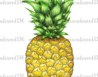 Colored Pencil Pineapple