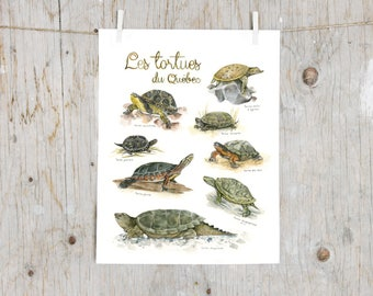 Print Turtles of Québec  | Watercolor turtles painting | Art mural Nature | Poster identification classification turtle | Educative gift