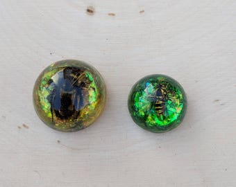 Bee Magnet, Wasp Magnet, Real Bee Magnet, Magnet Gift Set, Resin Magnet, Assorted Magnets, Decorative Magnets, Glittery Magnets