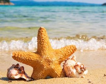 Starfish or seastar on beach photo poster print