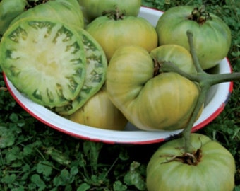 VTH) AUNT RUBY'S German Green~Tomato~Seeds!!!~~~~~~What a Beauty!