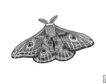 Moth drawing - Moth art - Moth decor - Moth painting - Moth artwork - Moth print - greeting card - Moth dotwork