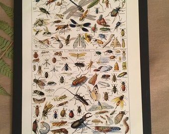 Board naturalist, history & natural sciences - insects - Larousse