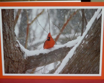 Winter scene - Red Cardinal in Maryland