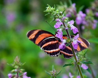 Butterfly #5 (Set of 8 Note Cards)