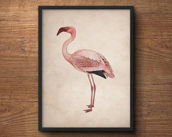 Flamingo wall print, Flamingo print art, Pink flamingo, Flamingo wall art, Flamingo art, Flamingo wall decor, Flamingo poster, Bird poster