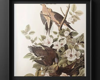Audobon bird print/ morning dove/ yellow bird