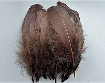 set of 5 feathers Brown 15-20cm