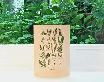 Ferns: Greeting Card