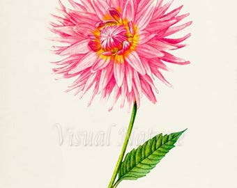 Dahlia Park Princess Flower Art Print, Botanical Art Print, Flower Wall Art, Flower Print, Floral Print, Pink Flower