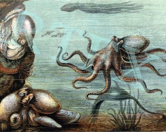 Pacific Giant Octopus Undersea Notecard