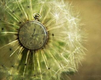 Dandelion Clock - Wishing Flower Photo Art Print
