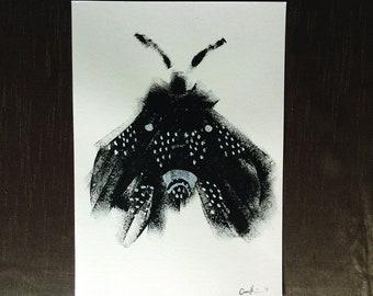 Leamhan (Moth)