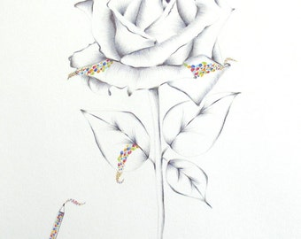 Rose wall art, color pencil art