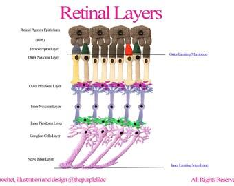 Eye Biology - Retinal Layers (Instant Download), Crochet Illustration, Crochet for Science, Sciency Crochet, Science Education