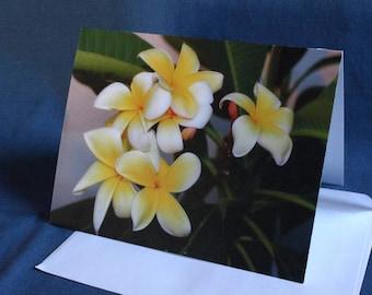 Yellow Plumeria Flowers (Note Card)
